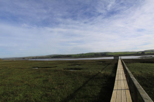 tomales-bay-lodging-one