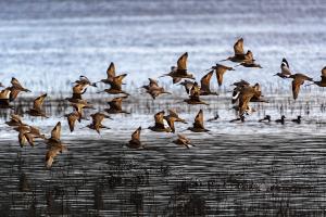 birds-aflight-for-Fb